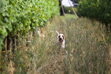 into the vineyards