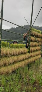 """Vertical rice drying stand - """"Aroy"""""""